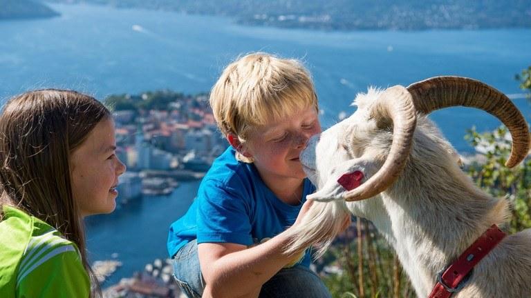 Møt geitene på Fløyen - #Fløyenguttene
