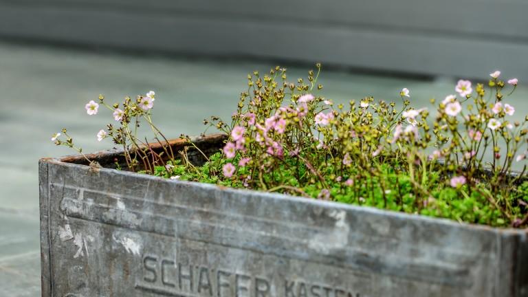 Vårmarked på Fløyen