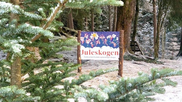 Juleskogen på Fløyen
